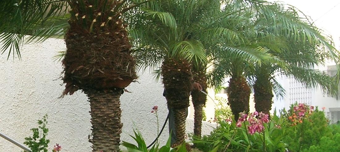 Árboles y Palmas
